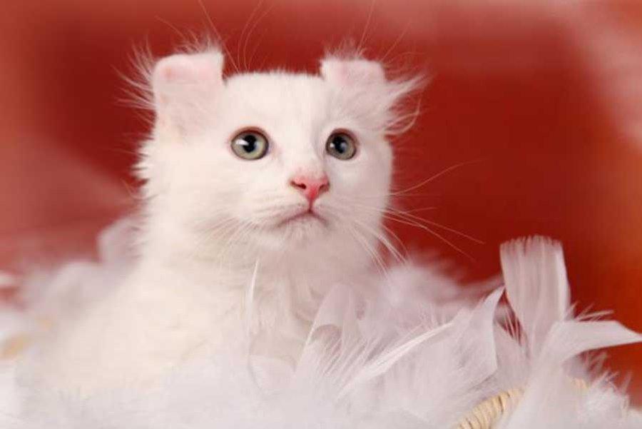 Мячик-белый кот