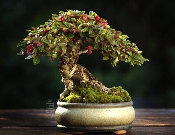 дерево и мох