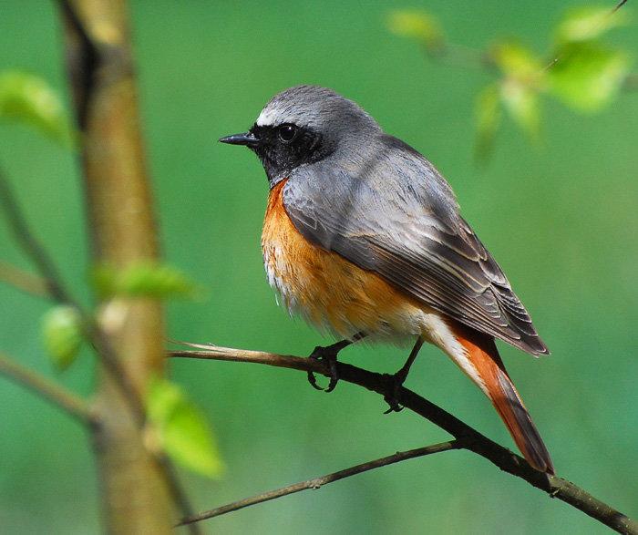 Фото птиц. Певчие птицы-птицы России. | Блог Владимира Сергунина