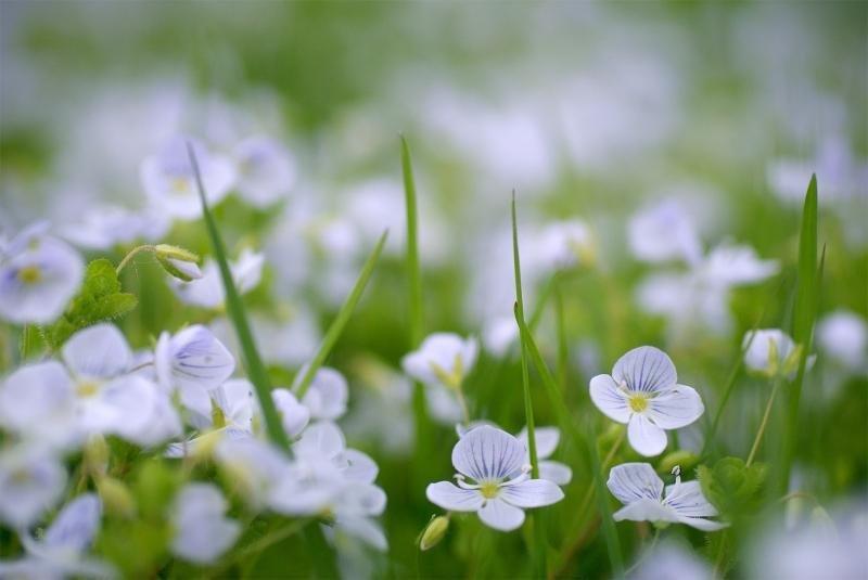 Обои priroda, vesna, cvety для рабочего стола – картинка #46159 ...