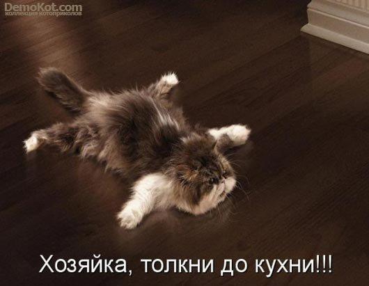котоматрицы прикольные коты фото
