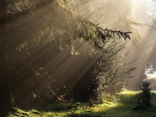Лучи света в густом лесу