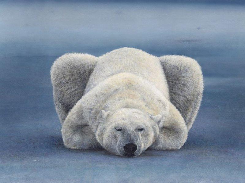 медведь белый полярный, скачать фото, обои для рабочего стола