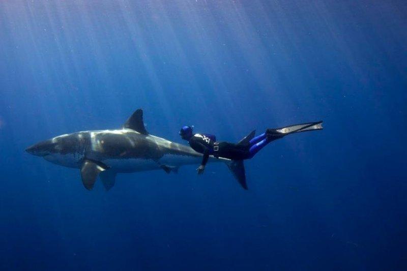 Плаванье с акулами / Фотоблог / Prozrak — Места для подводной охоты