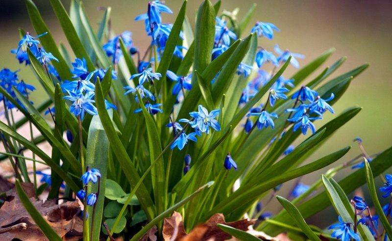 Природа весной сплошь цветы :) » Поржать.ру