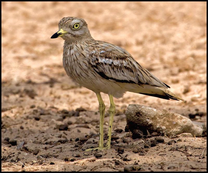 Птицы  - Фотографии животных - ЖИВОТНЫЕ КРАСНОЙ КНИГИ РФ