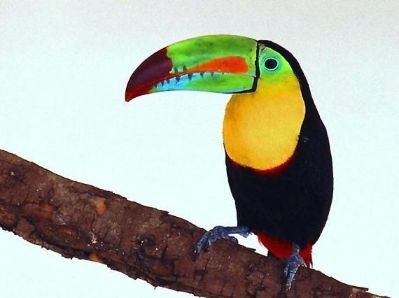 Птицы на фото, красивые картинки самых разных птиц