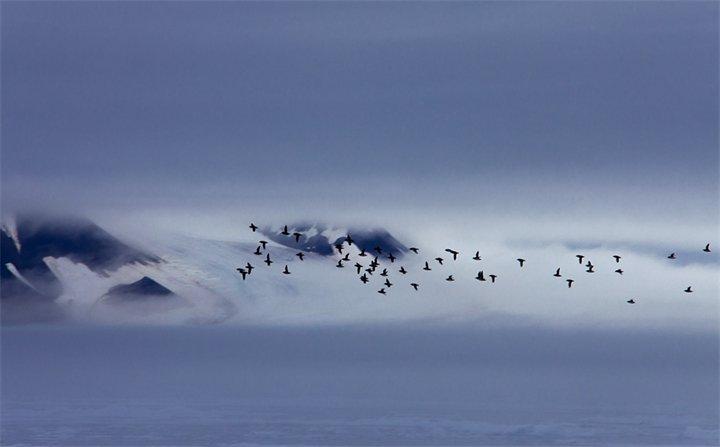Птицы над полюсом