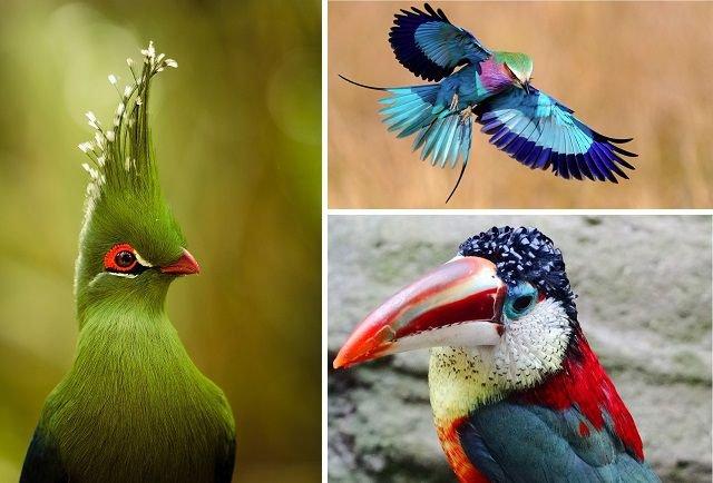 Птицы, сошедшие со страниц сказок