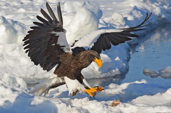 редкие птицы из красной книги россии