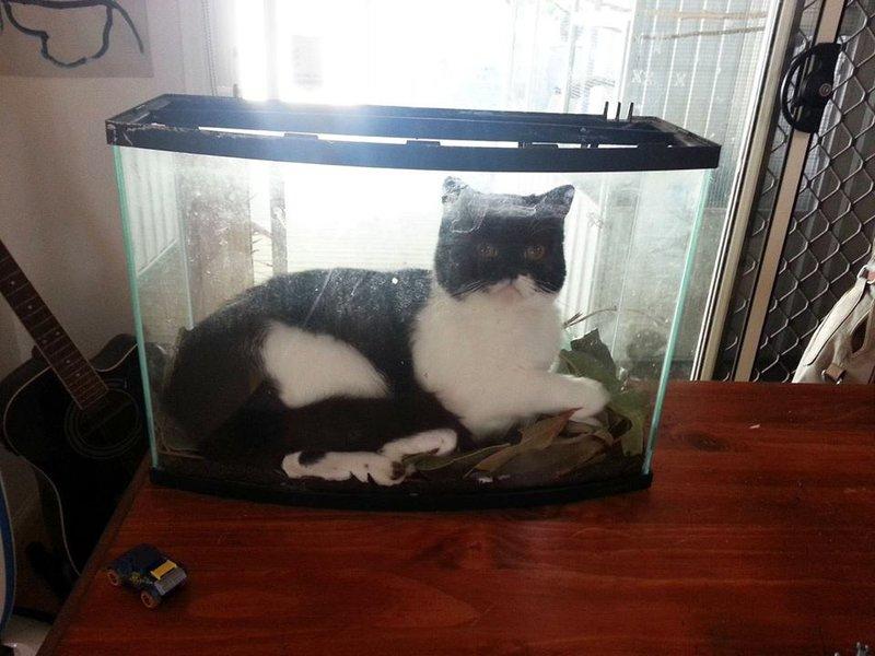 Смешные фото прикольных кошек,  фотографии котов | ZOODOM