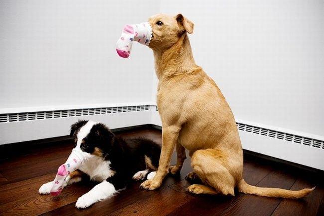 Собака, у которой есть собственный блог (51 фото)