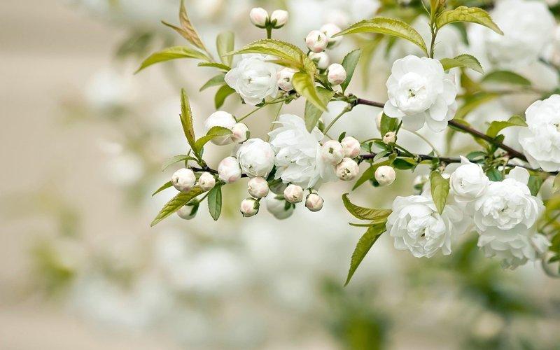 Цветение весной обои, картинки, фото