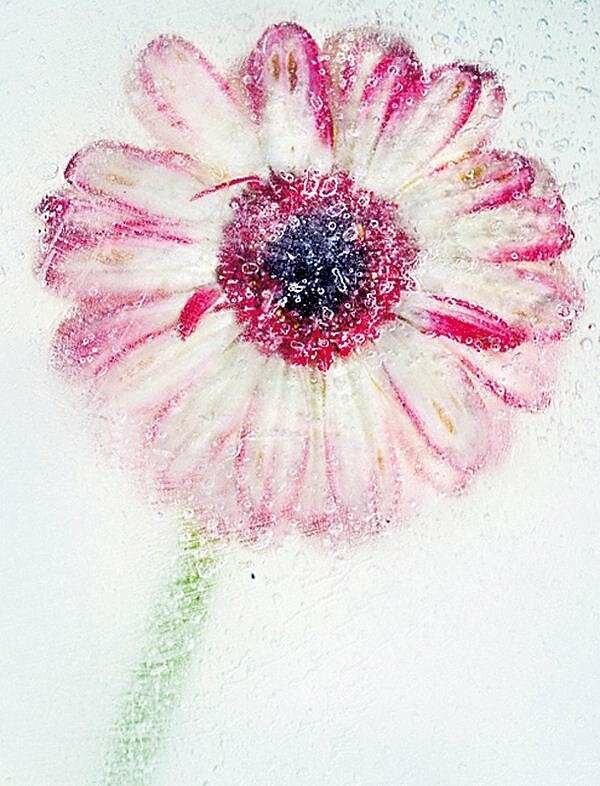 Уроки фотографии: Ледяные Цветы