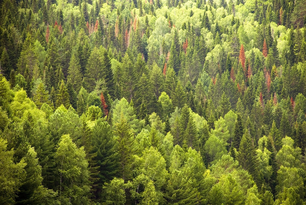 жильем проблем картинки тайга лес может заключаться увлечении