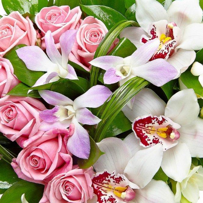 красивые картинки орхидей и роз