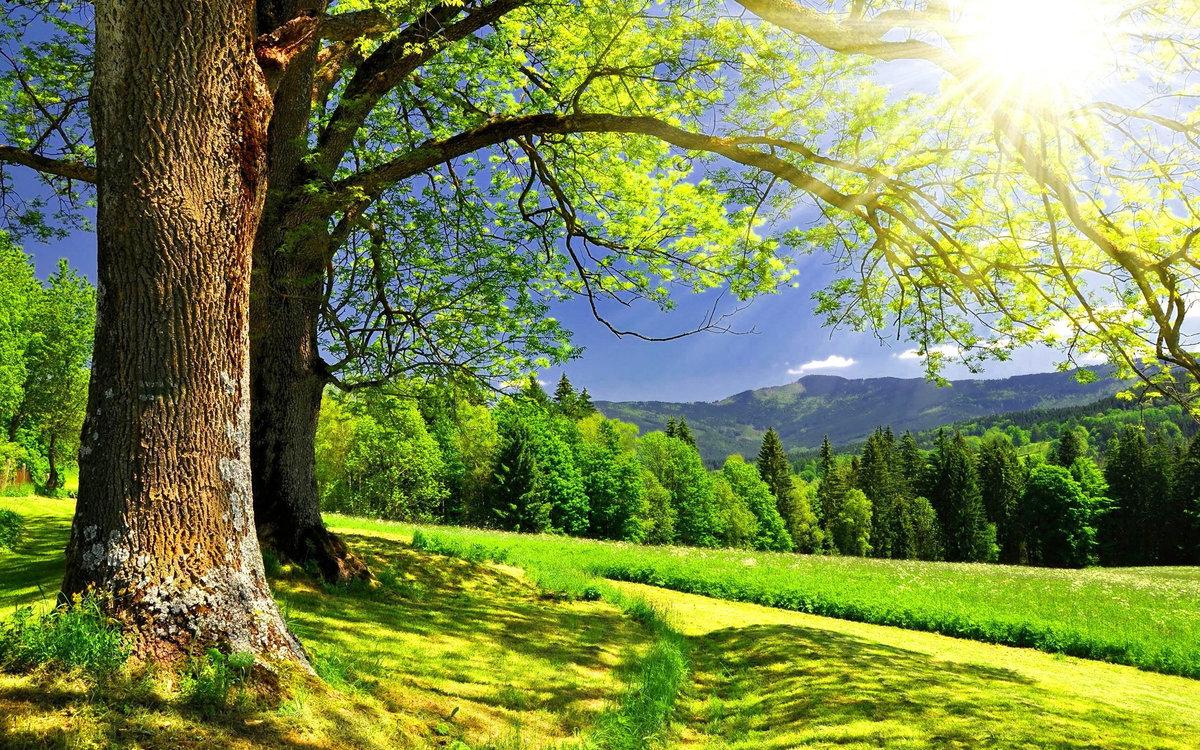 Красивые картинки с природой, природы картинка
