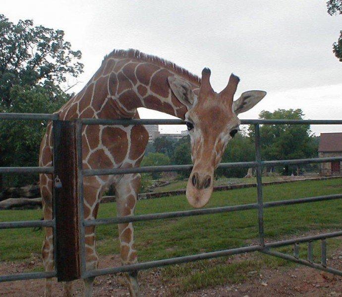 Зоопарк Литл-Рока