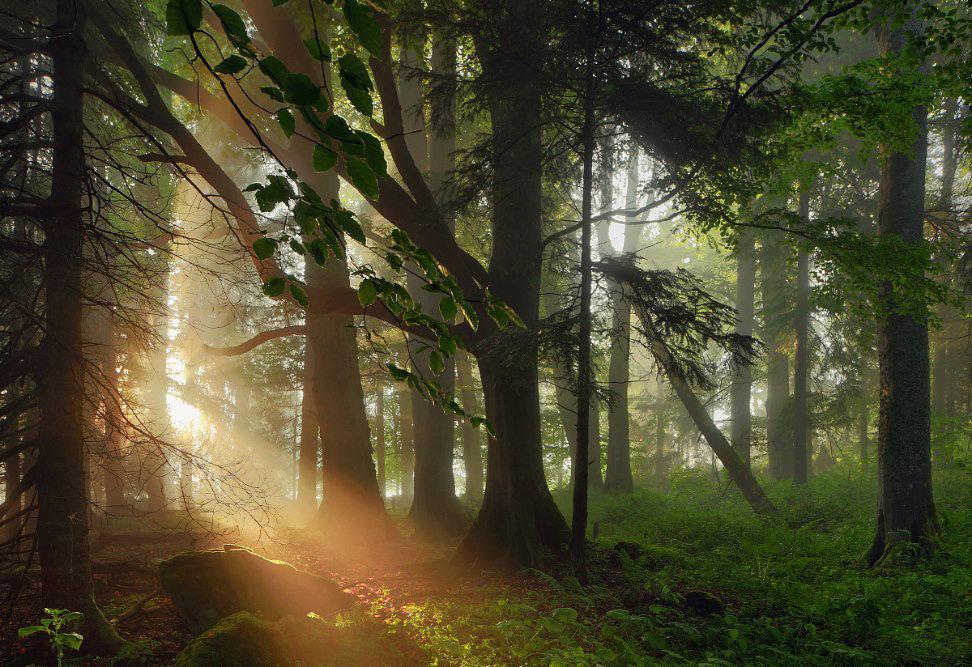 картинки таинственного леса