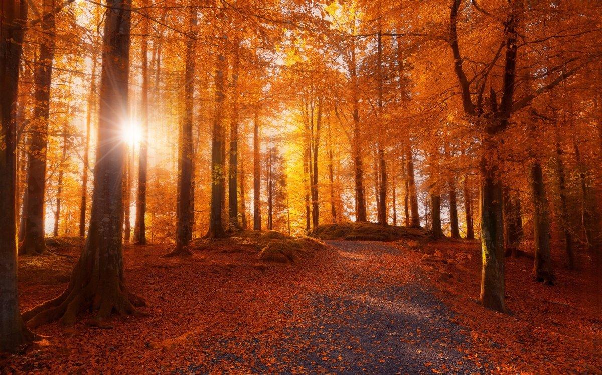 Лесной пожар - предвещает завершение планов, благополучие и достаток.