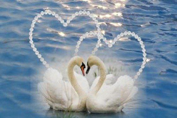 Картинки с любимому о вечной верности и любви