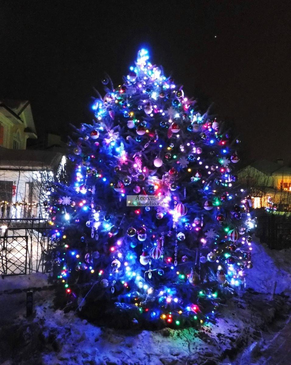 фото елка во дворе новым человеком