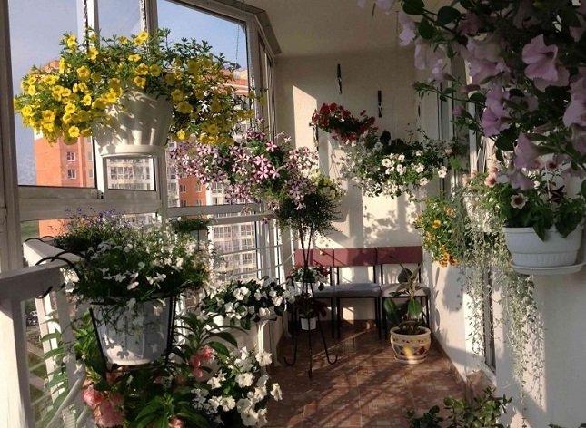 Озеленение балкона: какие растения выбрать.