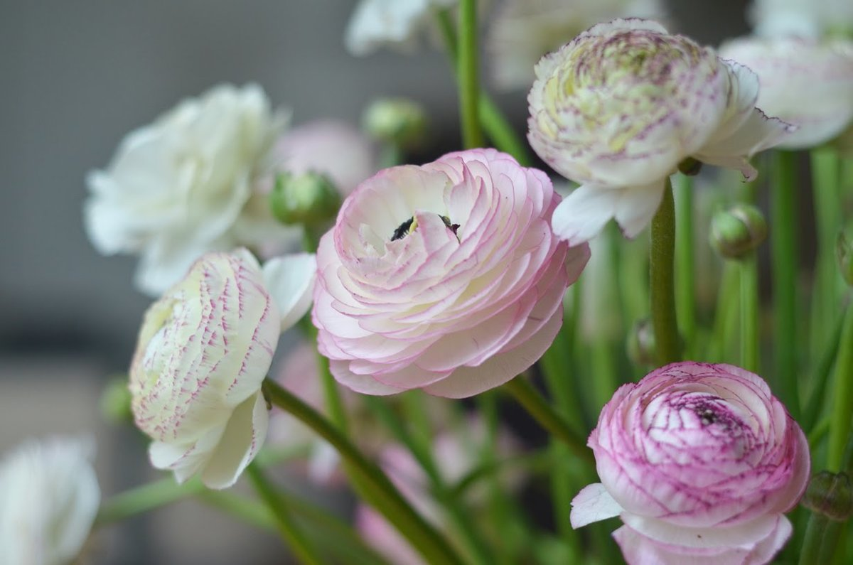 Смешные движутся, картинки лютики цветочки