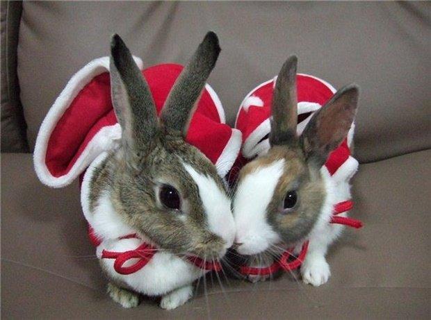Кролики в костюмах