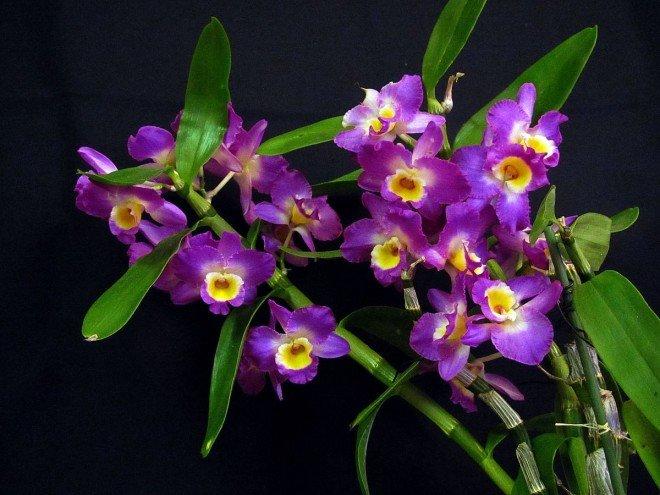 Жёлто фиолетовые цветы