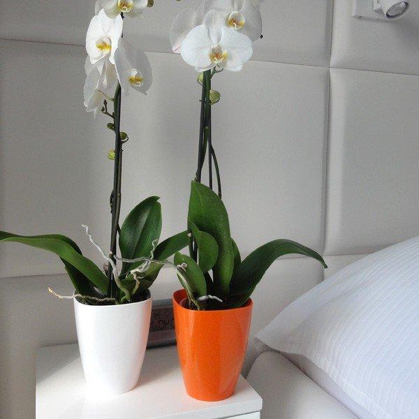 Какие горшки для орхидей нужны, как правильно выбрать емкость 67