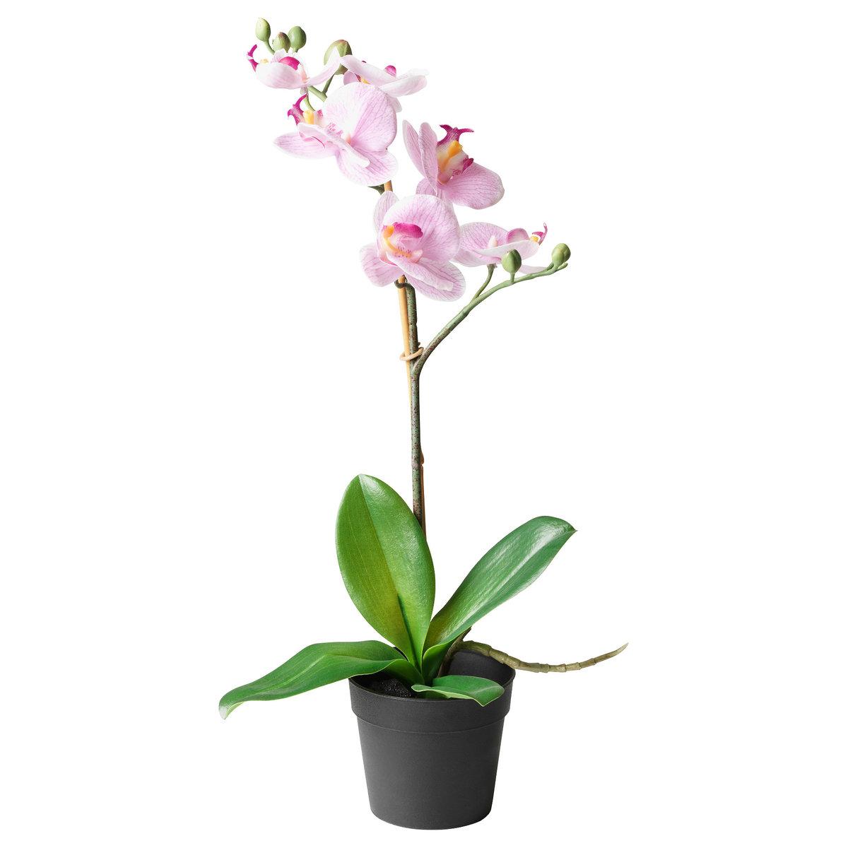 Цветов через, цветы орхидея купить цена