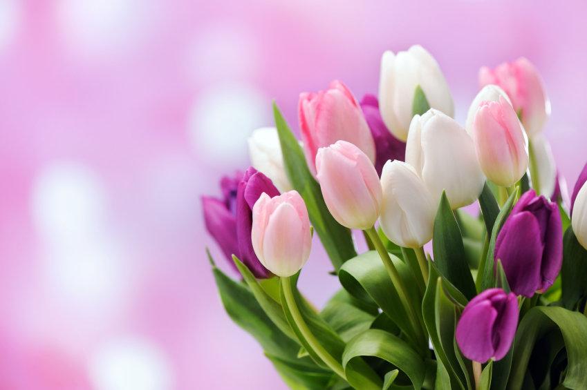 Тюльпаны картинка на открытку