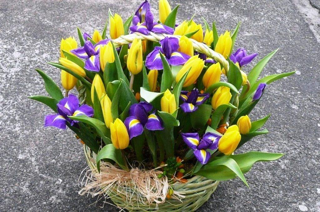 Картинки с тюльпанами и ирисами, днем рождения
