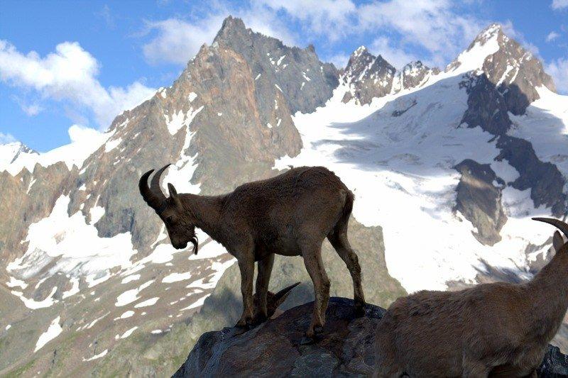 животный мир гор фото желании сможете