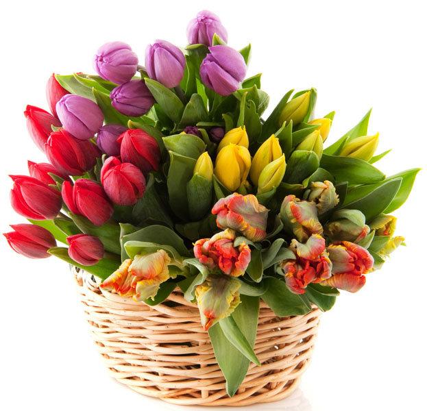 Любимый картинки, открытки тюльпаны в корзине