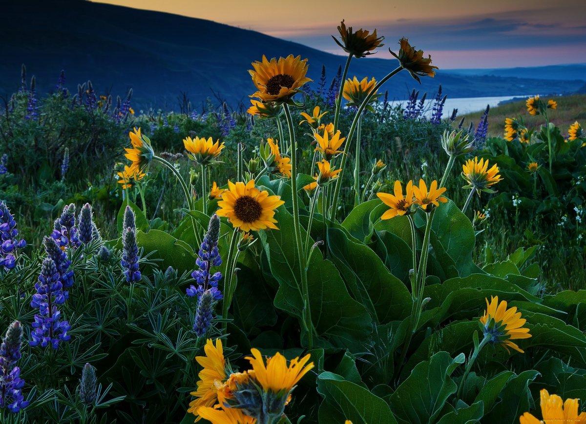 Фото красота растений в природе