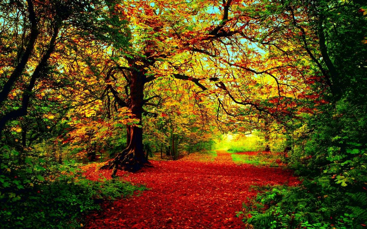 Картинки с видами осени