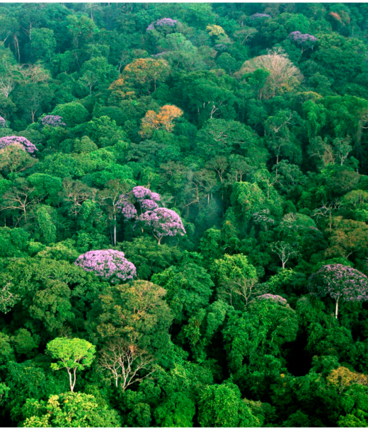 an essay on the importance of the tropical rainforest Essay the tropical rainforests of the world in this term paper, i will explain the great importance of the tropical rainforests around the world and discuss the effects of the tragedy of rainforest destruction and the effect that it is having on the earth.