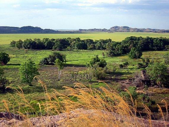 арк Какаду был основан в 1981 году, но Национальным парком он стал лишь в 1999 году, когда был принят соответствующий закон. Парк включен в список Всемирного наследия ЮНЕСКО.