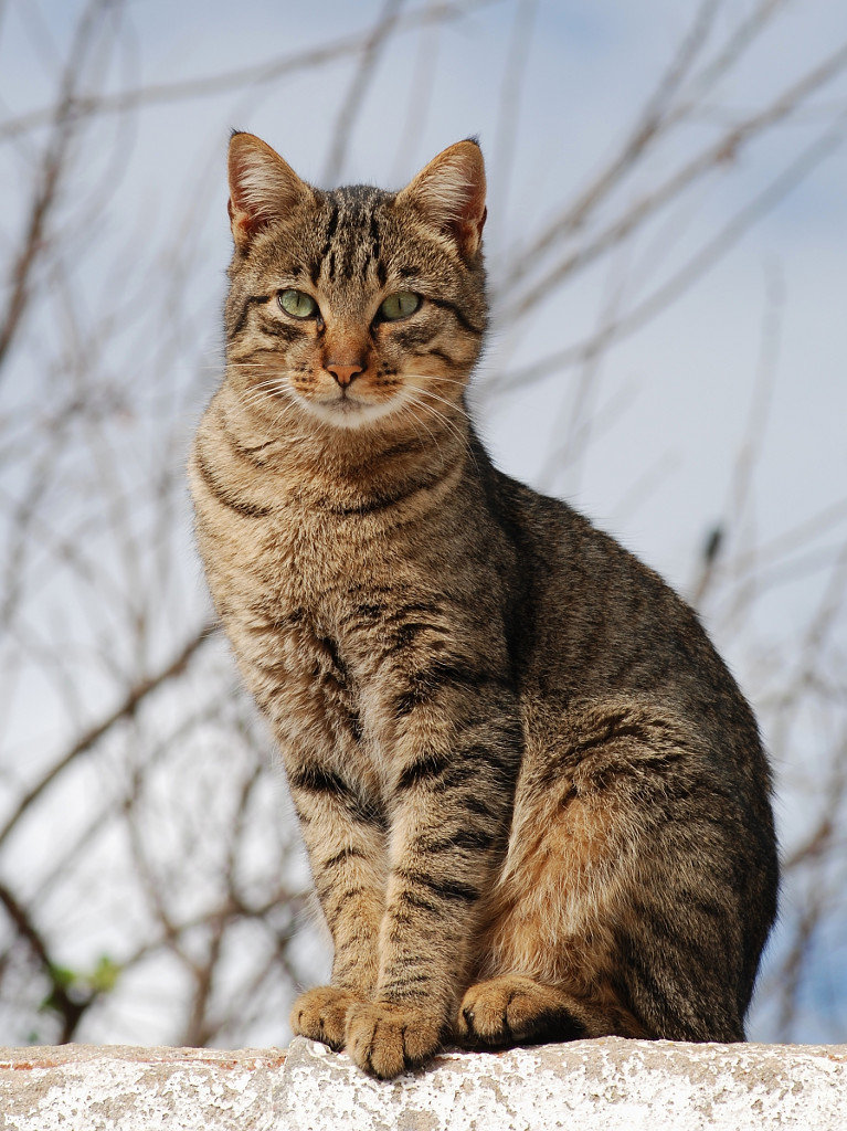 Фотографии кошек картинки