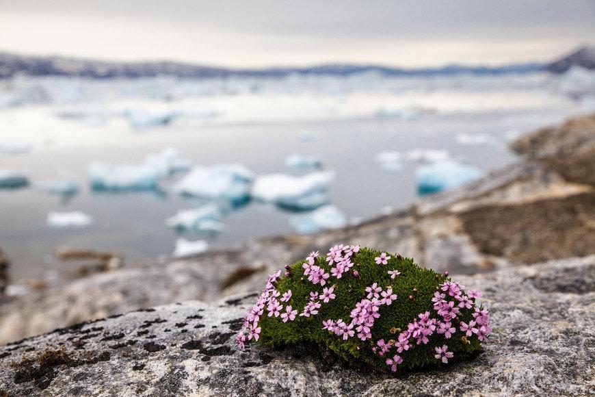 Северные цветы картинки
