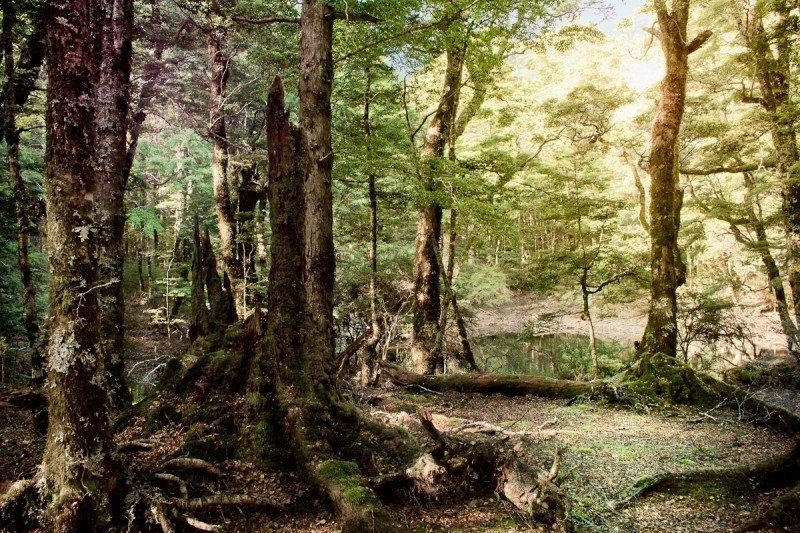 был давно лес новая зеландия фото известного художника этом люди