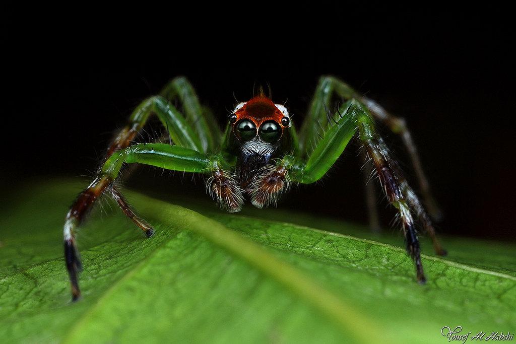 самые картинки пауки достижение