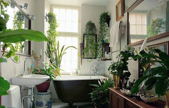 Цветы и растения в интерьере - это эстетика , они привлекают своей красотой, и прежде всего, обладают полезными для здоровья свойствами, они очищают воздух от токсинов, подавляют шум и успокаивающе влияют на наши чувства.