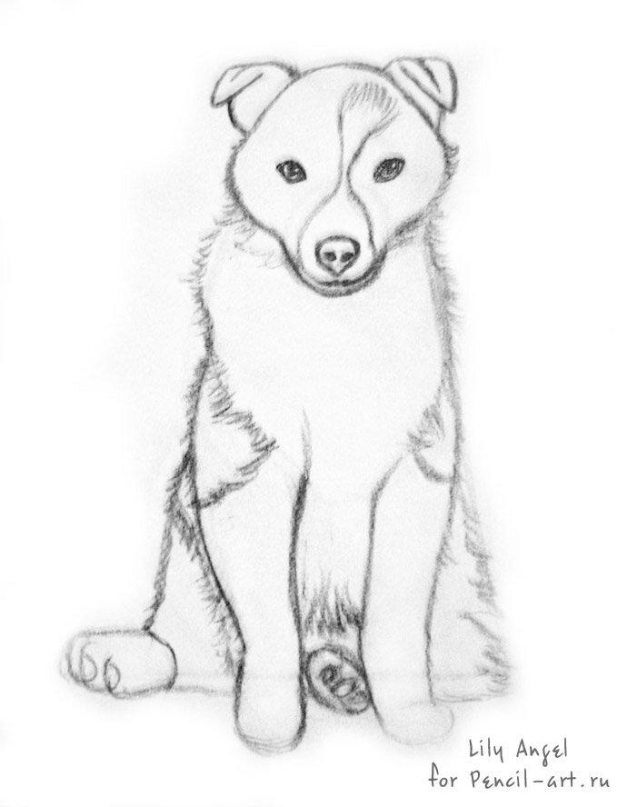 Рисунки карандашом не сложные но красивые собаки