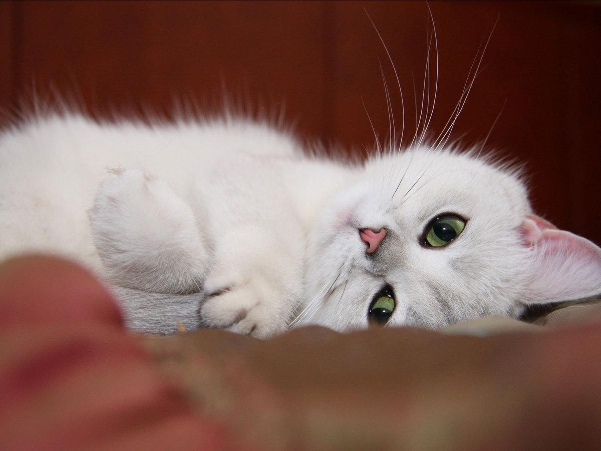 Февраля добрым, доброе утро картинки котеночек мой