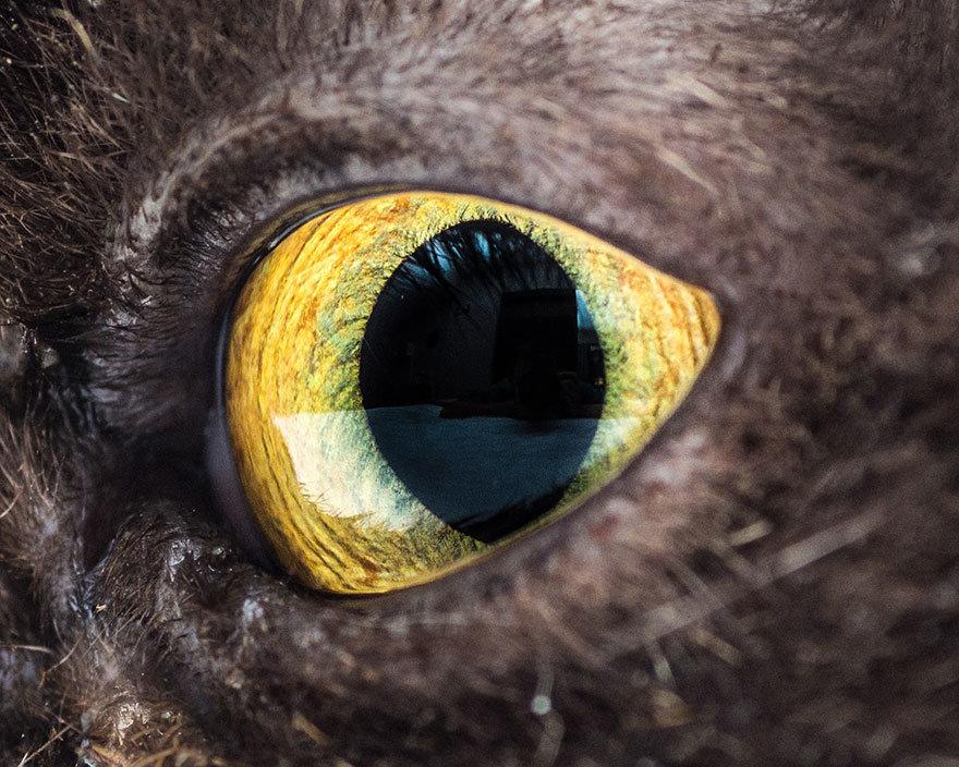Картинка глаза животного