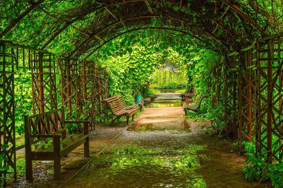 сердце любовь оранжерея в ботаническом саду в москве человека, отправившегося