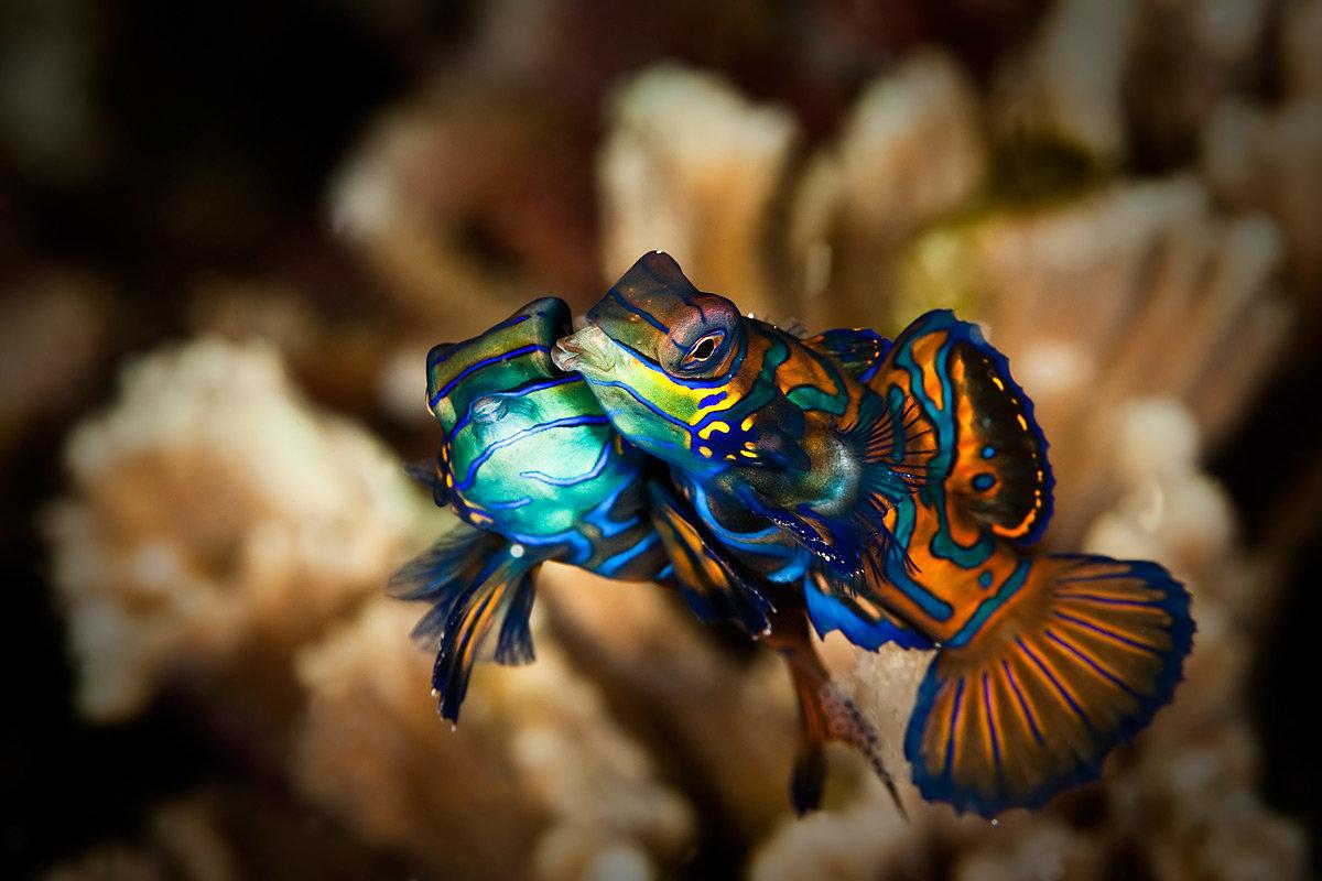 редкие рыбы с картинками новички знают